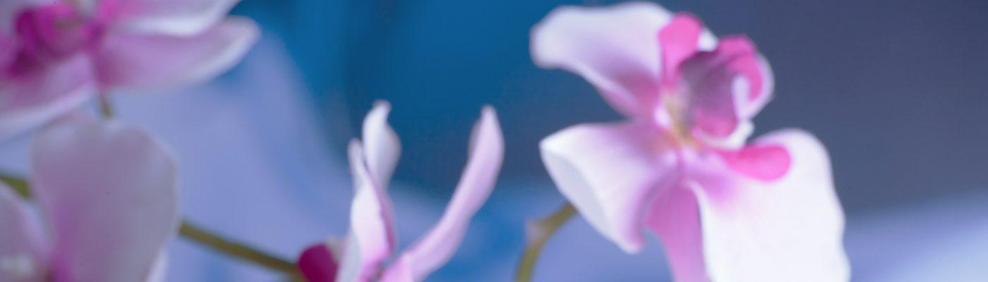 Moonlight Garden Acupuncture