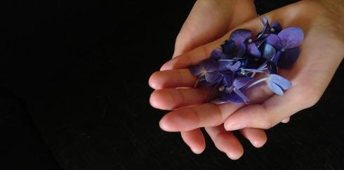 violet-flowers-2091643_1280